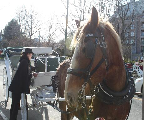 Victoria horse-drawn carriage