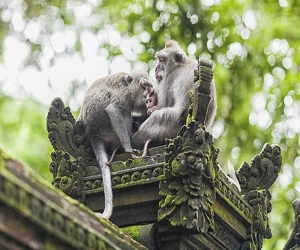 Monkey family in temple